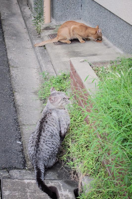 Today's Cat@2012-09-10