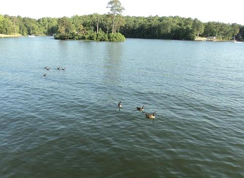 party lake alabama lakejordan