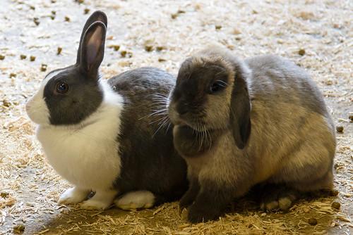 Wascally wabbits