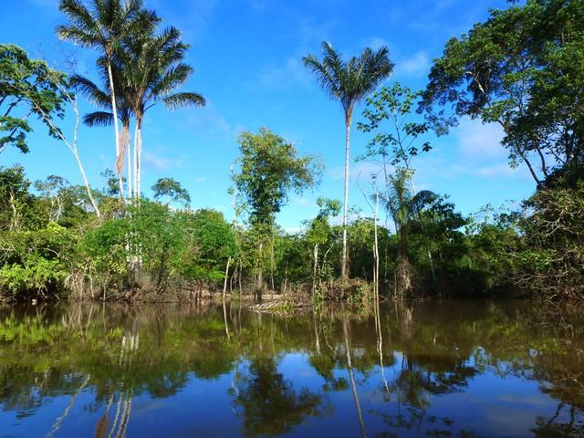 Amazon River, Peru - Flickr CC globalwaterforum