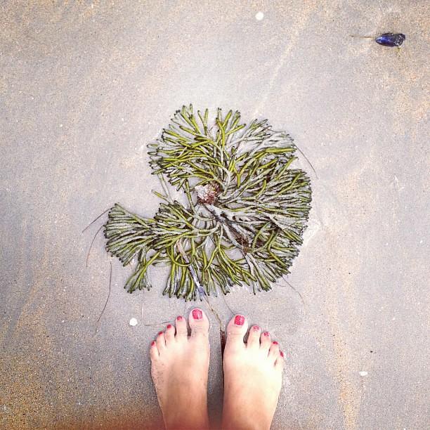 Algas en arena