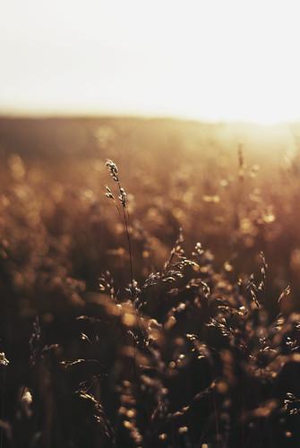 light sunrise 50mm scotland nikon warm edinburgh bokeh f18 edimburgo scozia d3000