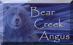 Bear Creek Angus