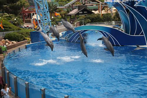 Dolphins all jumping at once
