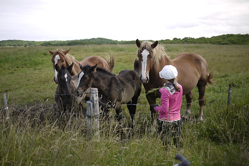 Big Clydesdale-ish horses south of Rausu (Hokkaido, Japan)