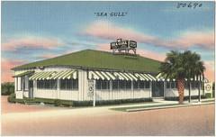 Sea Gull, Jacksonville, Florida