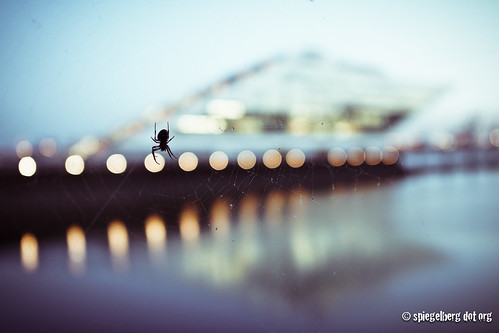 Dockland Spider