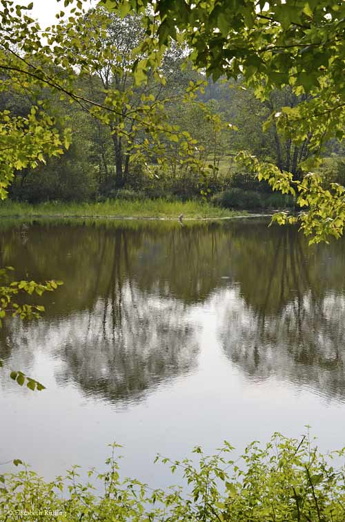 View of the pond, through the trees, by Elizabeth Ruffing