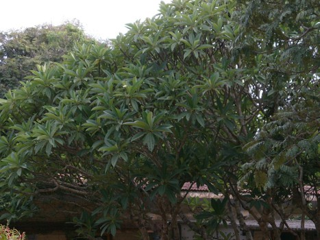 Kalakshetra-Nizhal-Tree-Walk