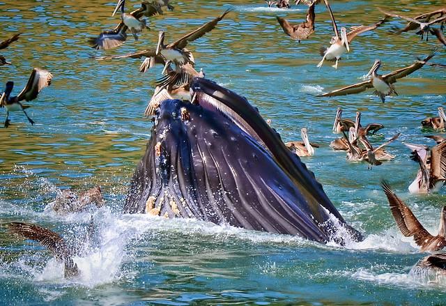 Whales at port san luis avila beach california flickr for Avila beach fishing