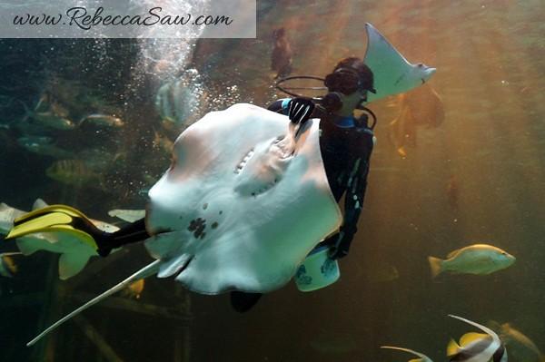 Singora Tram Tour - songkhla aquarium thailand-011