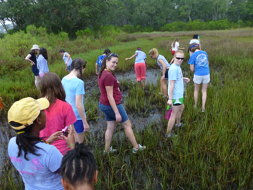 SciGirls trek into the marsh