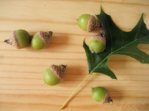 cute baby acorns