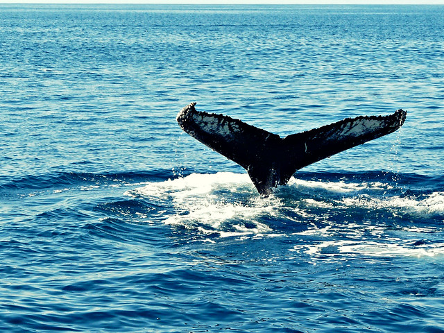 Iceland Whale Watching In September Tours