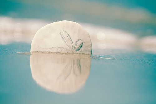 ocean california sea reflection beach aqua surf sandiego shoreline pacificocean thecure sanddollar imperialbeach endofsummer silverstrand thelastdayofsummer eightdaysaweek pixelmama mortalmuses