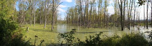 ithaca newyork unitedstates swamp