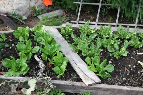 september garden plot 015