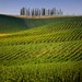 Travel through the Tuscany landscape of cypress-dotted hills
