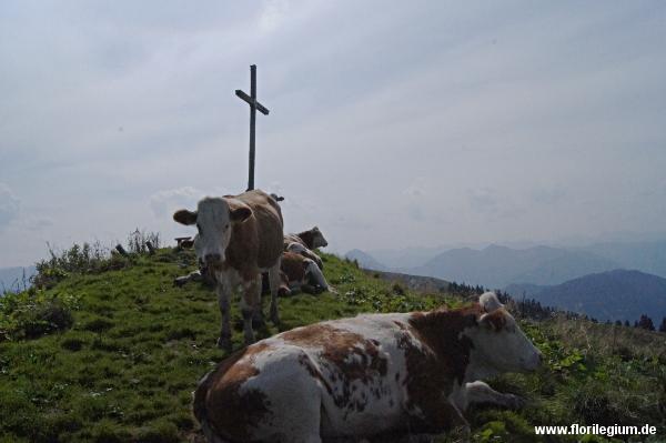 Seekarkreuz: Gipfelfoto mit Kühen