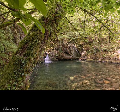 Asturias Naturaleza Viva