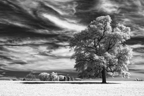wallpaper sky bw tree field clouds landscape ir blackwhite infrared 木 风景 树 壁纸 ツリー 樹 mytree maxmaxcom पेड़ वृक्ष xnitecanong9 樹樹 柅 柂