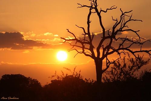 africa sunset sky naturaleza sun sol nature landscape southafrica soleil tramonto view natureza ngc natura céu pôrdosol ciel cielo puestadesol sole krugernationalpark entardecer coucherdusoleil pôrdesol thegalaxy