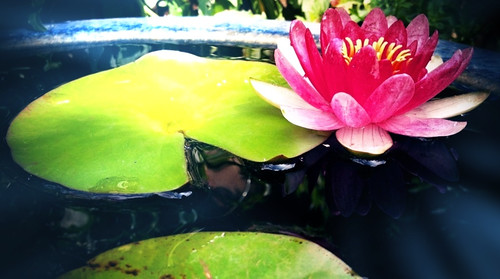 Water lily princess