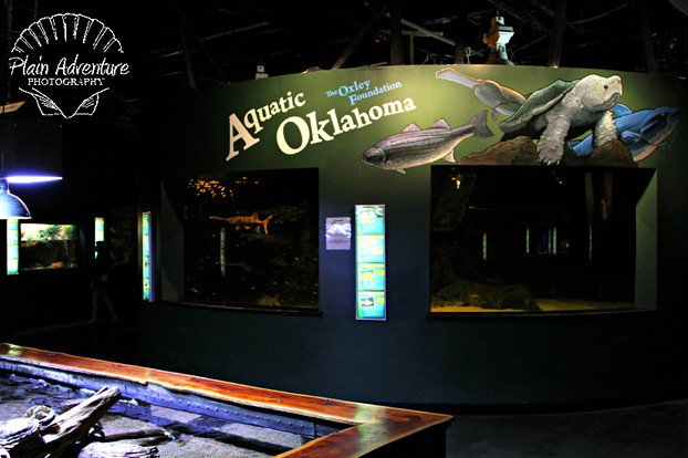 8005111763 0113f6b8d7 z Oklahoma Aquarium: Bringing the Ocean to the Plains