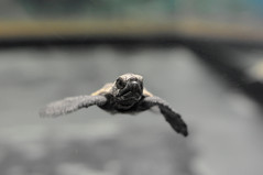 [Free Images] Animals 2, Reptiles, Turtles ID:201208140400