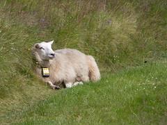 Siste ferieuka i Gausdalen.