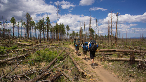 Hiking through the Ponil fire wasteland