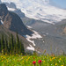 Wildflowers with Mt. Rainier backdrop