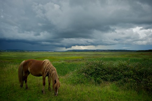 sky horse storm wales clouds zeiss landscape estuary gower stormclouds darksky loughor welshlandscape penclawdd horsegrazing zeissdistagont2528zf2