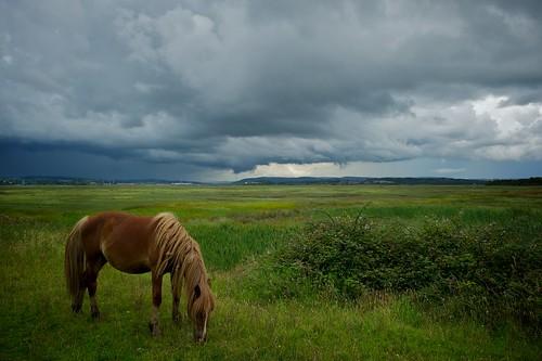 sky horse storm wales clouds zeiss landscape estuary gower stormclouds darksky loughor welshlandscape penclawdd horsegrazing zeissdistagont2528zf2