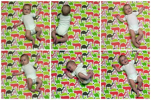 Five Months Collage