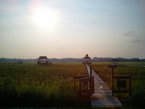 travel sunset summer vacation sun beach sc nature water grass island photography pier photo high weed south tide low rustic salt picture pic carolina marsh pawleys