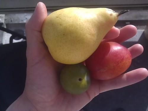hand full of fruit