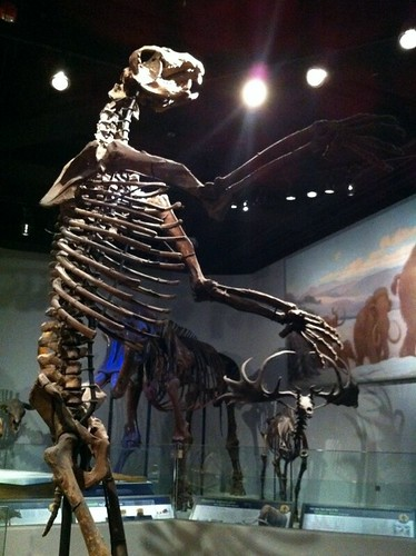Giant sloth at the Field Museum, Chicago.