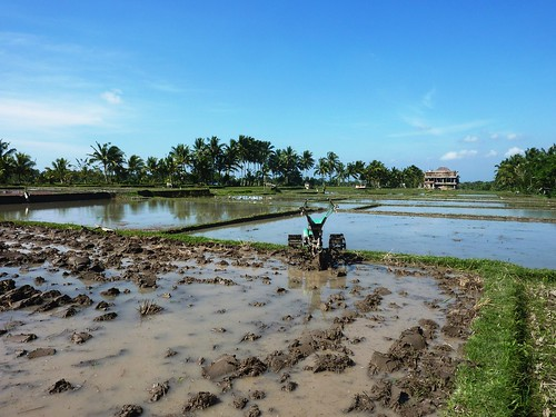 Bali- Ubud-Rizières (2)