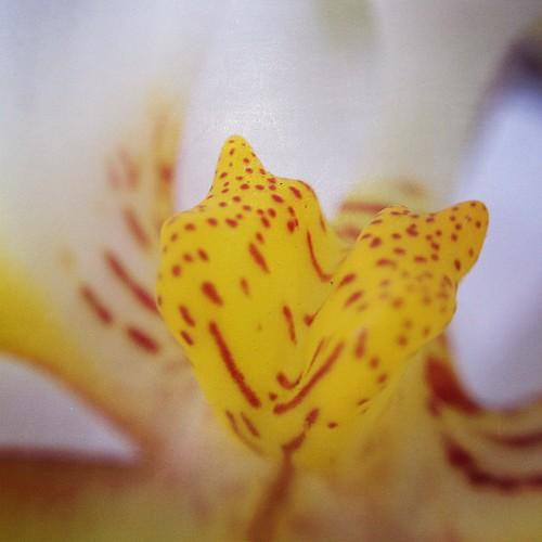 #macrogardener #orchid