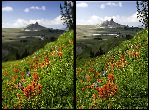 backpacking wildflowers wyoming grandtetons nationalparks grandtetonnationalpark tamron1750mmf28 deathcanyonshelf sonydslra700