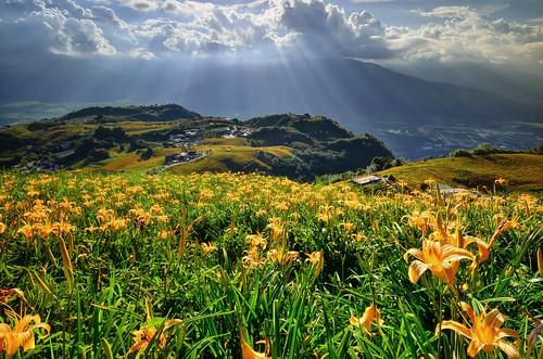 flowers light sunset sun mountain flower landscape raw lily sundown taiwan 夕陽 sunburst rays 小瑞士 burst 雲 日落 sum 花蓮 金針花 耶穌光 金針山 六十石山 光芒 六十石 金針花海 富里 斜射光 雲隙光 日芒