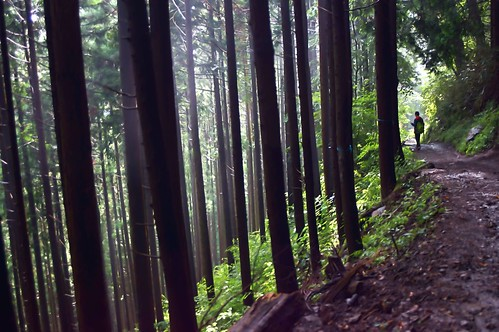 mountain tree rain japan photography tokyo climb sony 365 ome 山 岩 mitake takashi 杉 ceder 滝 青梅 nex 登山 366 御岳 kitajima turntable00000