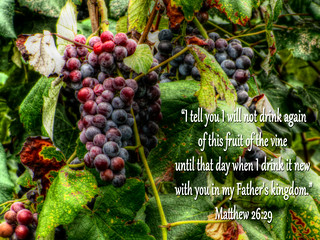 """I tell you I will not drink again of this fruit of the vine until that day when I drink it new with you in my Father's kingdom."" Matthew 26:29"