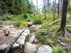Tour de la plaine d'Uovacce : le ruisseau à l'W de la plaine