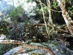 La fin visible de l'ancien chemin d'exploitation en RD à l'amont de la brèche du Carciara