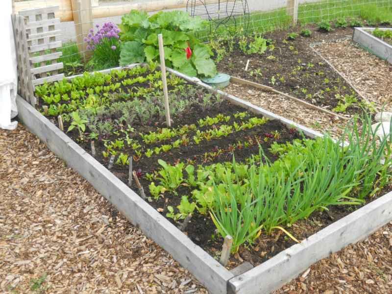 Jardineros en acci n control de plagas y enfermedades en el huerto for Casetas de huerto