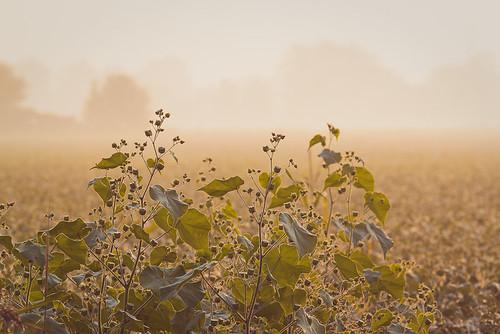 ontario canada field fog rural project farm 365 project365 scavengechallenge scavchal