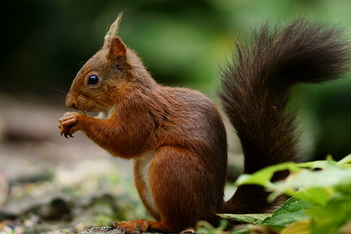 The Typical Squirrel Pose