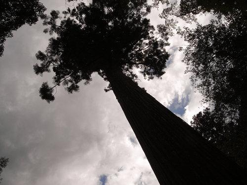 桜木神社と象の小川@吉野町-06